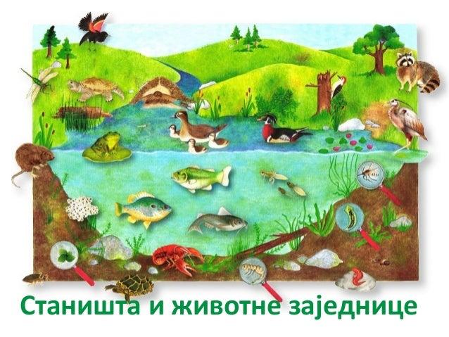 Станишта и животне заједнице
