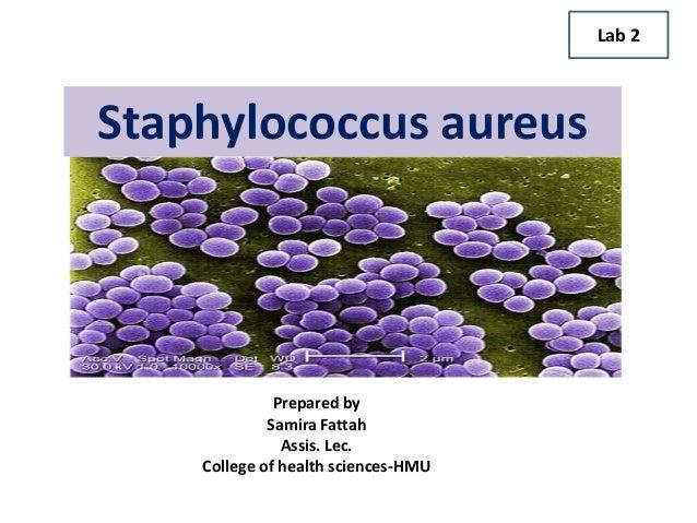 Staphylococcus aureus Prepared by Samira Fattah Assis. Lec. College of health sciences-HMU Lab 2