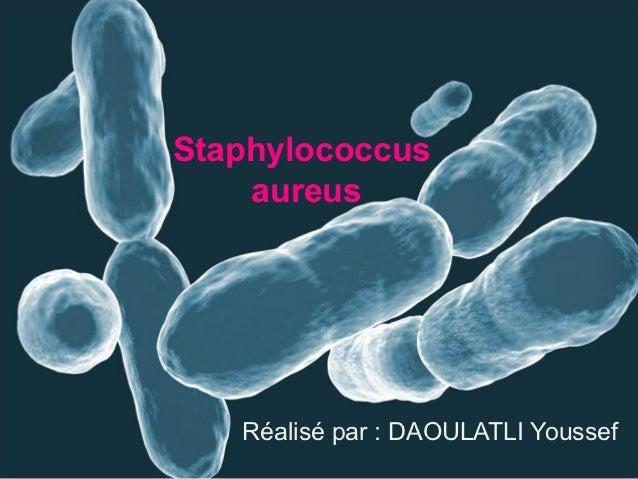 Staphylococcus    aureus   Réalisé par : DAOULATLI Youssef