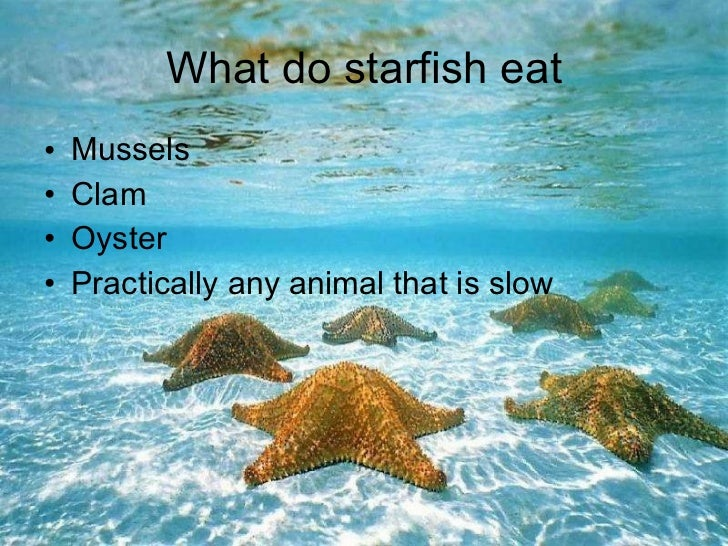 Star fish for How do fish eat