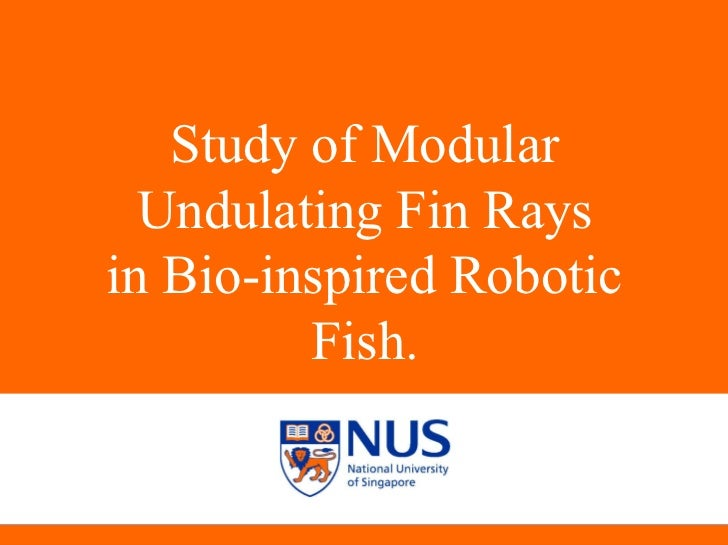 Study of Modular Undulating Fin Rays in Bio-inspired Robotic Fish.