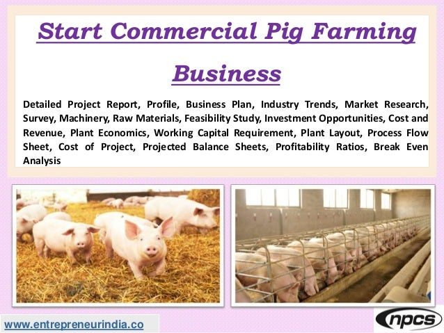 www.entrepreneurindia.co Start Commercial Pig Farming Business Detailed Project Report, Profile, Business Plan, Industry T...
