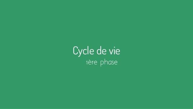 Cycle de vie 1ère phase