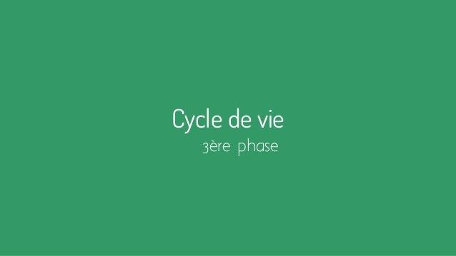 Cycle de vie 3ère phase