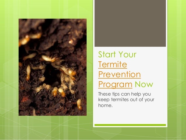 Start Your Termite Prevention Program Now These tips can help you keep termites out of your home.