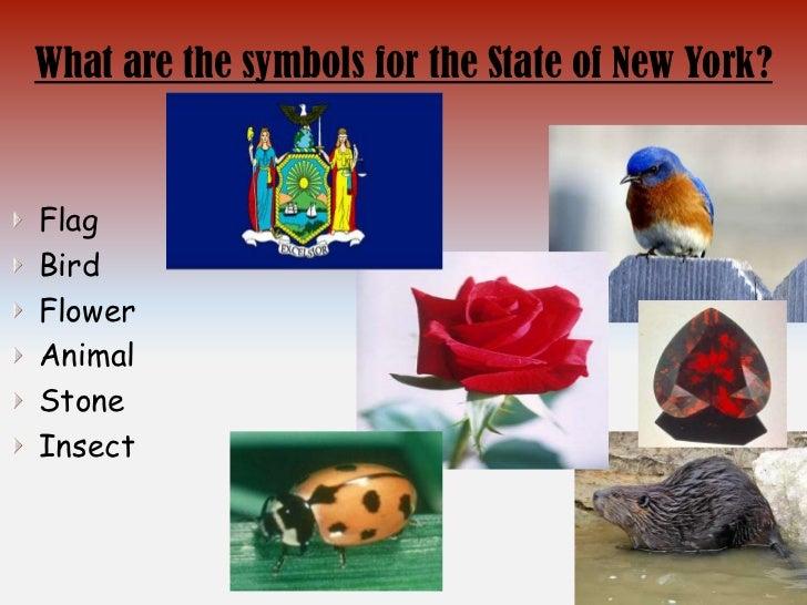 State New York