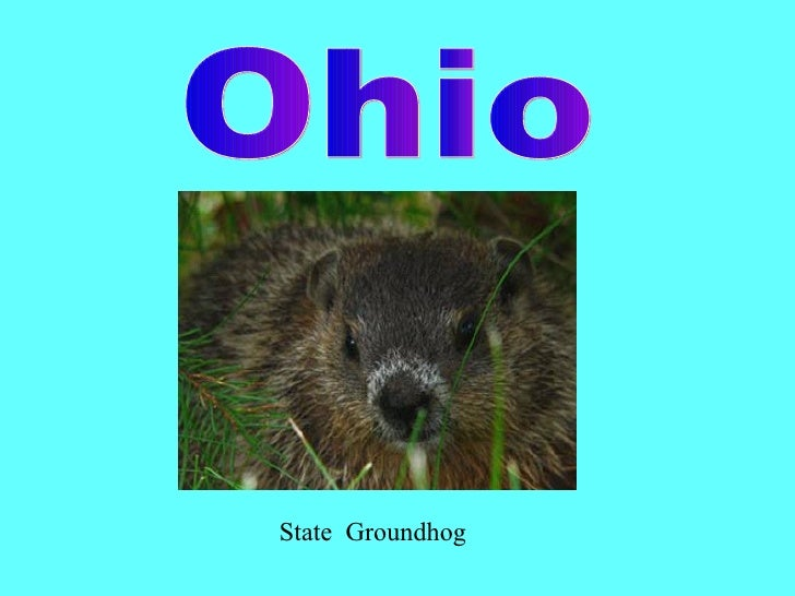 State  Groundhog Ohio