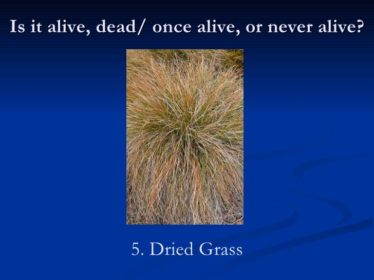 Merveilleux Is It Alive, Dead/ Once Alive, Or Never Alive? 5. Dried Grass; 7.