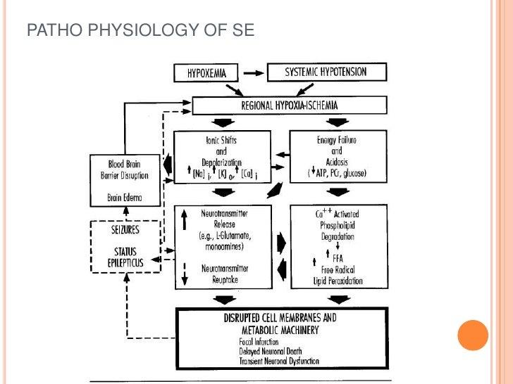 PATHO PHYSIOLOGY OF SE<br />