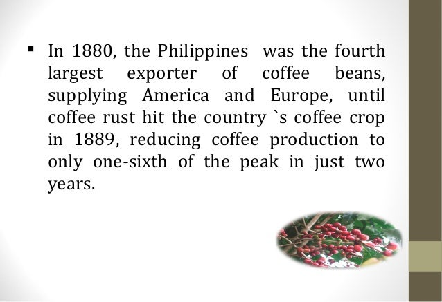 developing the philippine coffee industry