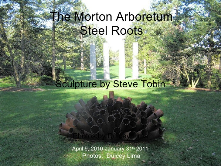 The Morton Arboretum Steelroots Sculpture by Steve Tobin Photos by Dulcey Lima April 9, 2010-January 31 st  2011 Photos:  ...
