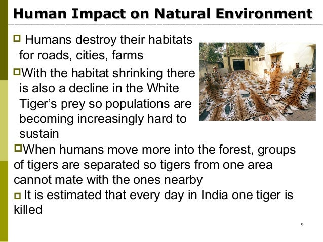 tigers effect on the ecosystem Mosquitoes generally get bad press few people claim to like them, and many more really dislike them: a mosquito bite ranges from being merely irritating to deadly.