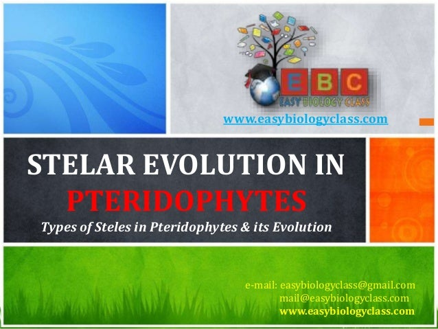 STELAR EVOLUTION IN PTERIDOPHYTES Types of Steles in Pteridophytes & its Evolution e-mail: easybiologyclass@gmail.com mail...