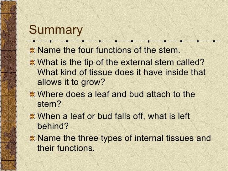 Stem Anatomy