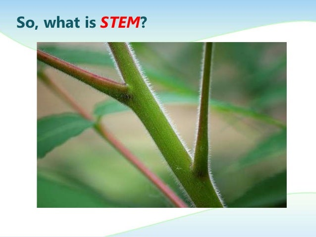 Intro to STEM in a Thai First Grade Classroom Slide 3