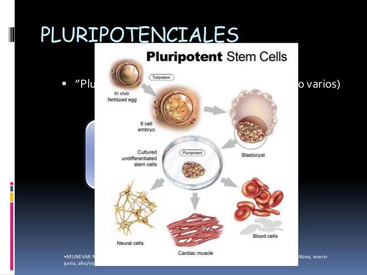 stem cells in dentistry pdf