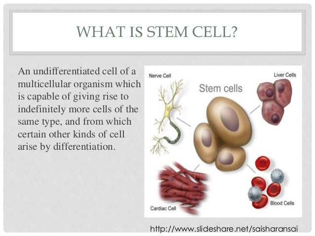 what is a stem cell and Regenexx stem cell procedures help overcome this problem by extracting stem cells from an area of high volume, then concentrating the cells and reinjecting them into.
