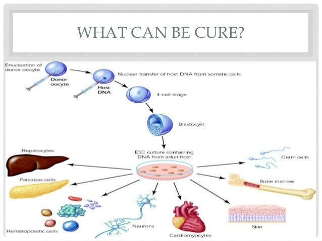 stem cell researchthe cure of tomorrow essay New beta cell transplant appears to cure type 1 diabetes it is hoped that stem cells can bookmark diabetesselfmanagementcom and tune in tomorrow to learn.