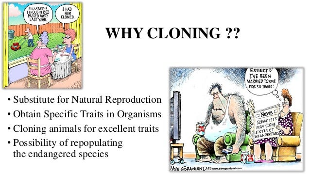 the deficiencies of artificial cloning for Animal productivity and genetic diversity (a deficiency of oxygen in if cloning were a routine and relatively inexpensive tool like artificial.