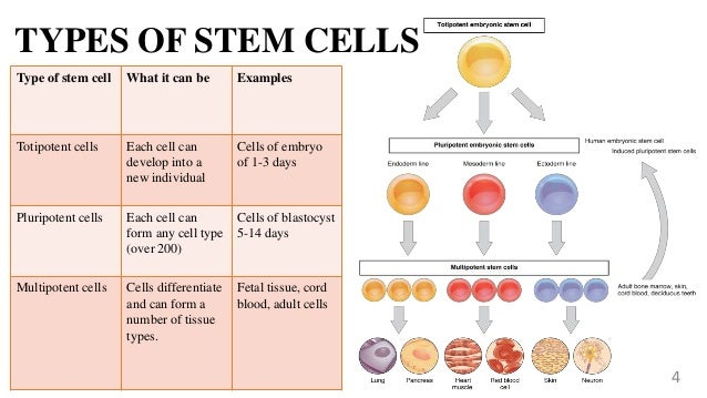 stem cells and cloning Human cloning may soon become an accepted means of producing human  embryonic stem cells for use in medical therapies the donaldson.