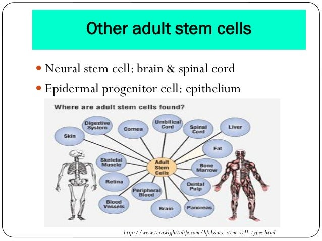 Stem Cell And Gene Therapy