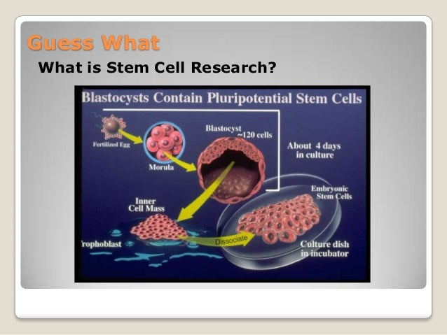 stem cell research arguments The debate over stem cell research arises from the allegation that using an embryo for study purposes is unethical in the process of carrying out.