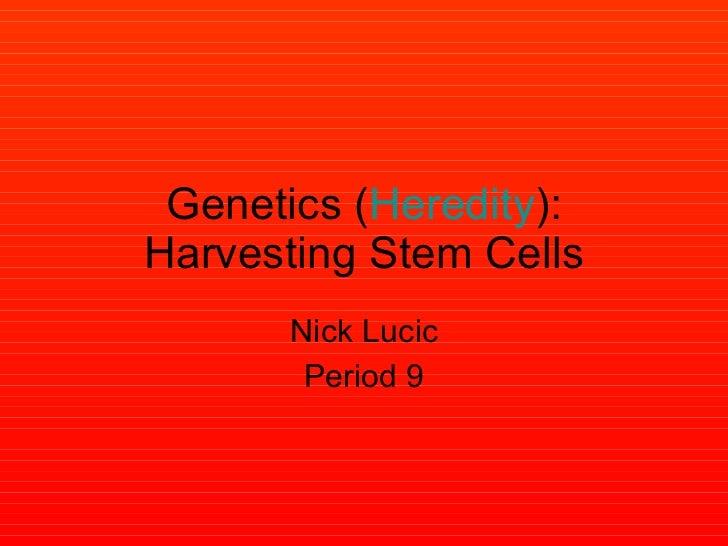 Genetics ( Heredity ): Harvesting Stem Cells Nick Lucic Period 9