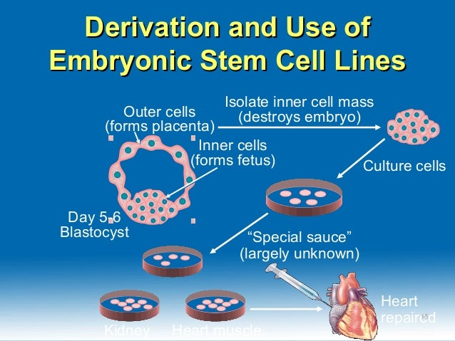 stem cell research biotechnology About us scientists helping scientists intro history history stemcell technologies inc is a canadian biotechnology company that develops specialty a comprehensive suite of immune cell isolation tools as well as products that support research using pluripotent stem cells and.