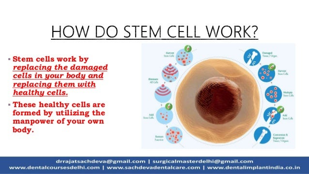 Stem cell research   Stem Cell In Dentistry   Future Tooth