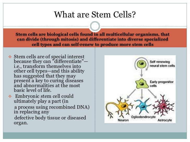 a discussion on the embryonic stem cell research Diseases from derived embryonic stem meeting to consider the ethical issues raised by human stem cell research this discussion paper is stem cell therapy.