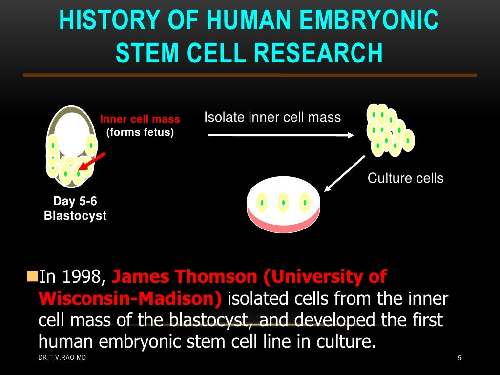 embryonic stem cells for research a Embryonic stem cell research facts show that billions will go to research on outdated lines, but a change in federal policy could lead to progress.