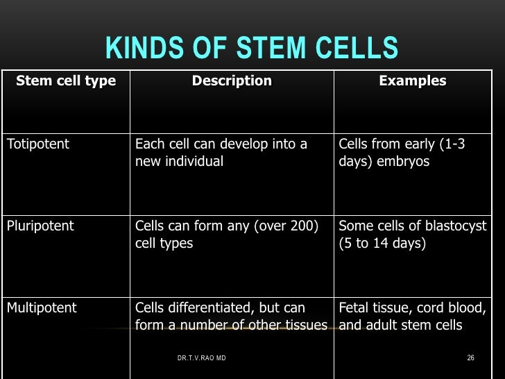 KINDS OF STEM CELLS Stem cell type            Description                  ExamplesTotipotent        Each cell can develop...