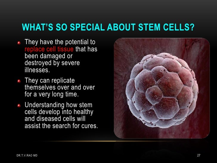 WHAT'S SO SPECIAL ABOUT STEM CELLS?     They have the potential to     replace cell tissue that has     been damaged or   ...