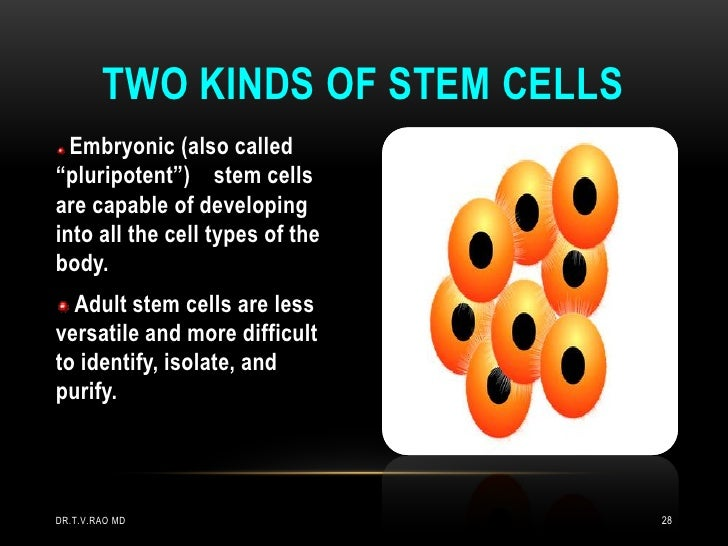 """TWO KINDS OF STEM CELLS  Embryonic (also called""""pluripotent"""") stem cellsare capable of developinginto all the cell types o..."""
