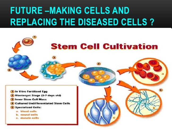 FUTURE –MAKING CELLS ANDREPLACING THE DISEASED CELLS ?DR.T.V.RAO MD                    64