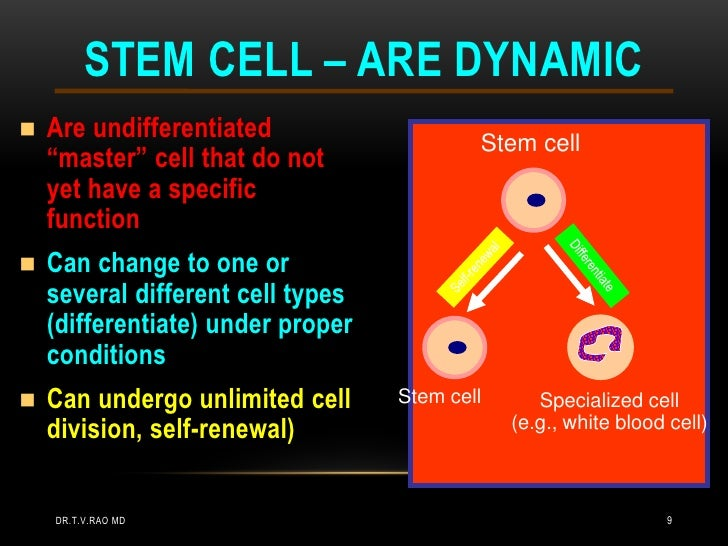 """STEM CELL – ARE DYNAMIC   Are undifferentiated                                           Stem cell    """"master"""" cell that ..."""