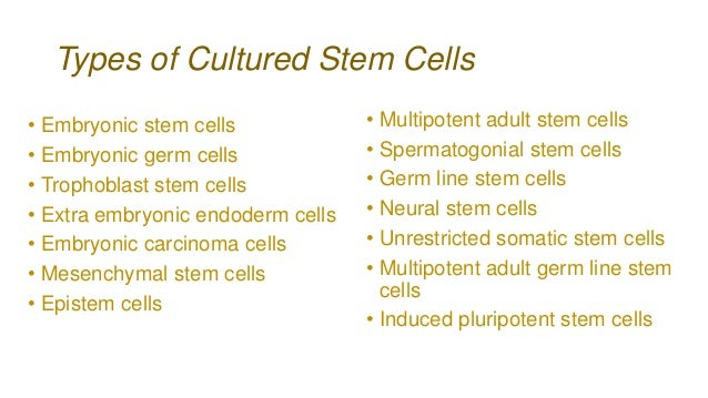 pros of stem cell research essay Wanna know some hottest stem cell research here we give you the pros as well as cons, the technology, the research usage and the ethical dilemma.