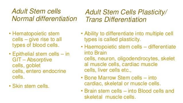 Adult stem cells versus embryonic consider