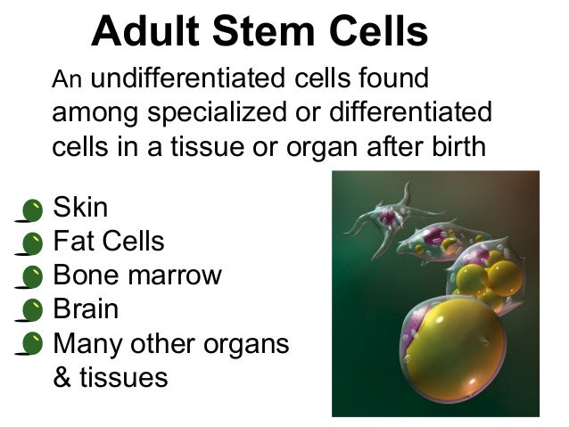 3 other cells an adult can donate for karyotyping