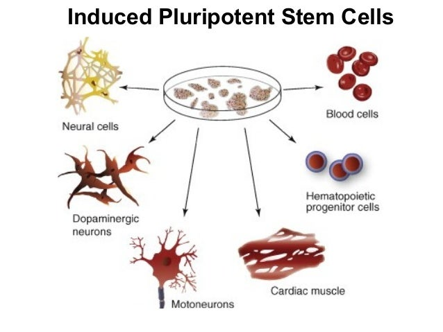 Stem Cell Frequently Asked Questions
