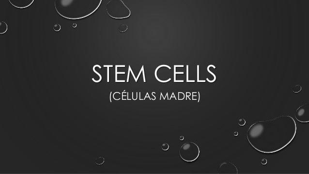 STEM CELLS (CÉLULAS MADRE)