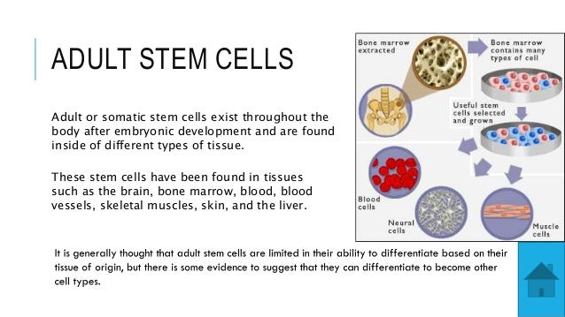 Information on adult stem cells