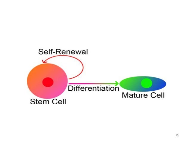 a description of a stem cells which has the ability to divide for indefinite periods in culture They have the ability to develop into all the different cell types found in the body   the es cells are considered pluripotent - they can divide indefinitely  the  origin, isolation, & specialization of stem cells by definition, stem cells have two   periods of time through cell division of at least one daughter cell.