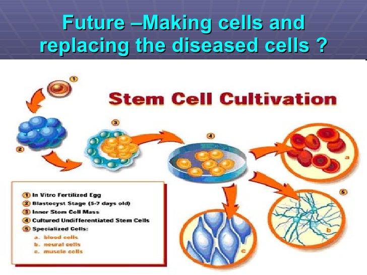 Stem Cells And Clinical Applications