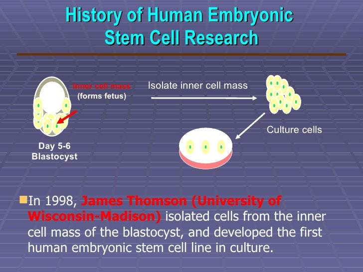 embryonic stem cells for research a Embryonic stem cells these aggregated structures contain derivatives of all three embryonic de wert g, mummery c (2003) human embryonic stem cells: research.