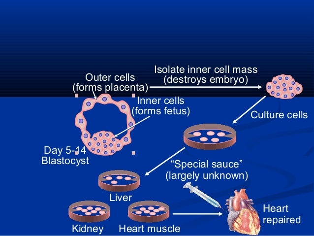 basics of stem cell research Stem cell research & therapy is the major forum for translational research into stem cell therapies an international peer-reviewed journal, it publishes high-quality open access research.