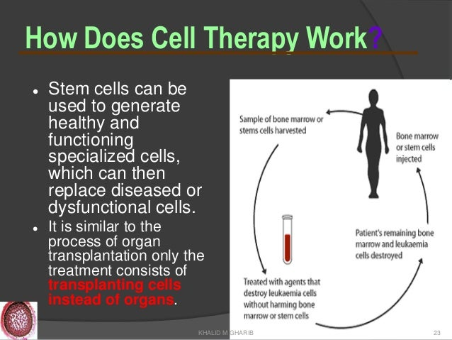 Stem Cells In Andrology