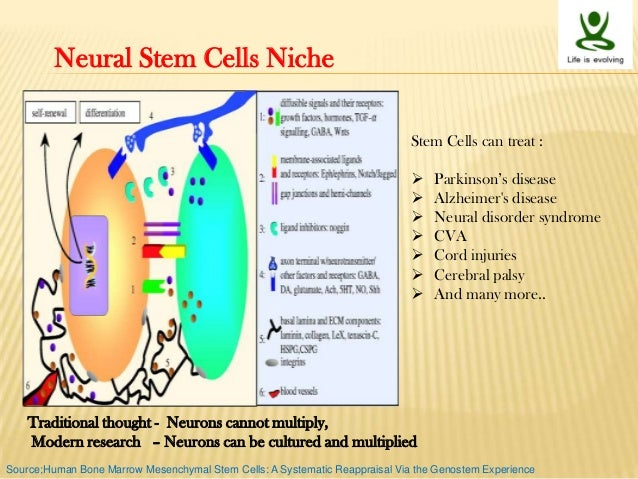 Stem Cells Niche And Therapeutic Applications
