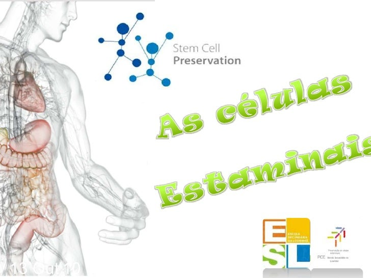 As células <br />             Estaminais<br />13 Out'10<br />Mestrado Integrado em Engenharia Biomédica<br />