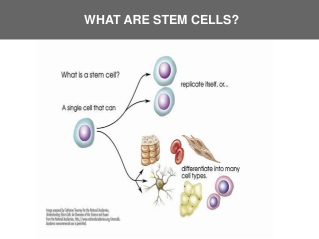 What is Stem Cell Technology?
